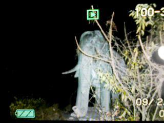 ゾウの像(笑).jpg